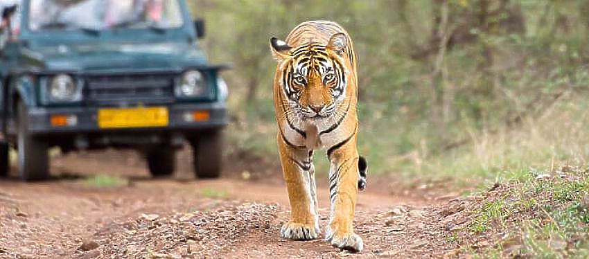 Vida silvestre de Rajasthan Tour de invierno ofertas 2016-17